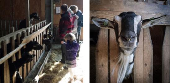 geitenboerderij eureka
